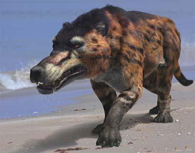A  reconstruction of Andrewsarchus, the largest known mesonychid or hoofed  predator, a from the documentary Walking With Prehistoric Beasts. This  screenshot is copyrighted by those who own the copyright to the film.