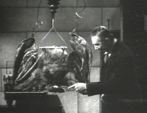 In the 1940 film 'The Devil Bat' Bela Lugosi stars as a mad scientist who sents this giant bat to attack people. This screenshot is copyrighted by those who own the copyright to the film.