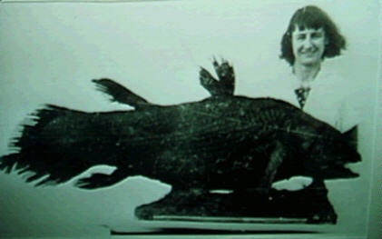 This photograph shows a stuffed specimen of the first coelacanth to ever be viewed by western scientists. The copyright for this photograph is in the public domain, according to Wikipedia.