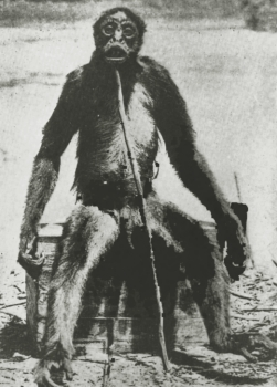 The most well-known mono grande or giant monkey is De Loy's Ape. This is copyrighted by those who own the copyright to the book cover art for 'Extraordinary Animals Revisited' by Karl Shuker.