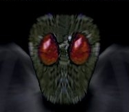 Mothman's insect-like face and huge red eyes are central features in most reports. This is copyrighted by those who own the copyright to the book cover art for 'Mothman: The Facts Behind the Legend' by Jeff Wamsley and Donnie Sergent Jr.