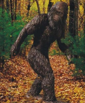 Skunk-apes have a tendency to look somewhat bigfoot-like, but are reported from areas far from the Pacific Northwest. This is copyrighted by those who own the copyright to the book cover art for 'Monsters of Pennsylvania by Patty A. Wilson' by Giles Sparrow.