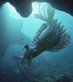 Some Cryptids Resemble Extinct Animals Such As This Ancient Aquatic Creature From The Documentary