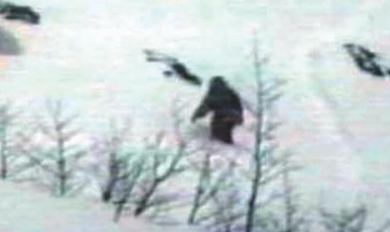This yeti picture is copyrighted by those who own the copyright to the book cover art for 'Monsters Caught on Film' by Dr. Melvyn Willin.